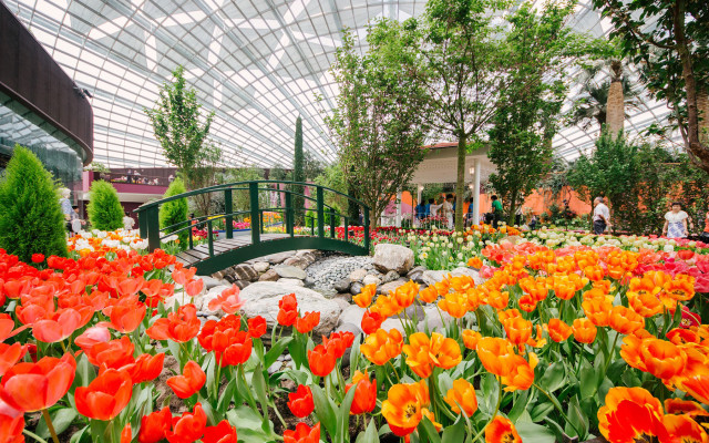 Tulipmania-2017-at-Gardens-by-the-Bay_tropicallife